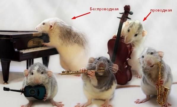 виды-мышек.jpg