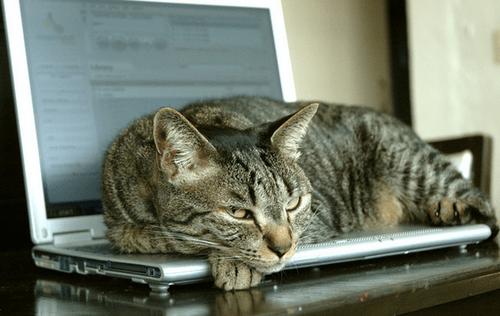 lap-cat-1243719.png