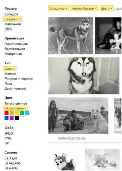 Yandex-filtri-poiska-po-izobrazheniyam.jpg