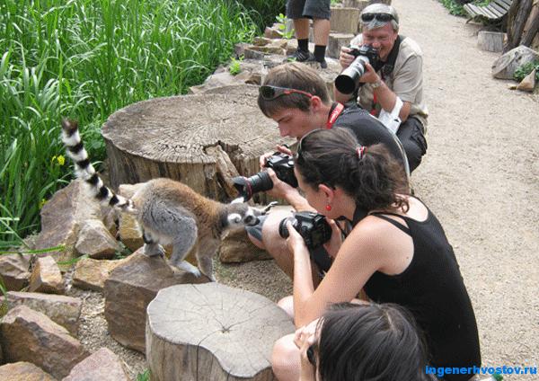 Andrey-Khvostov-zoo-Praga.png